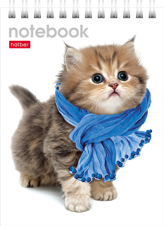 """Блокнот А6 40л Хатбер гр. """"Милые котята"""""""