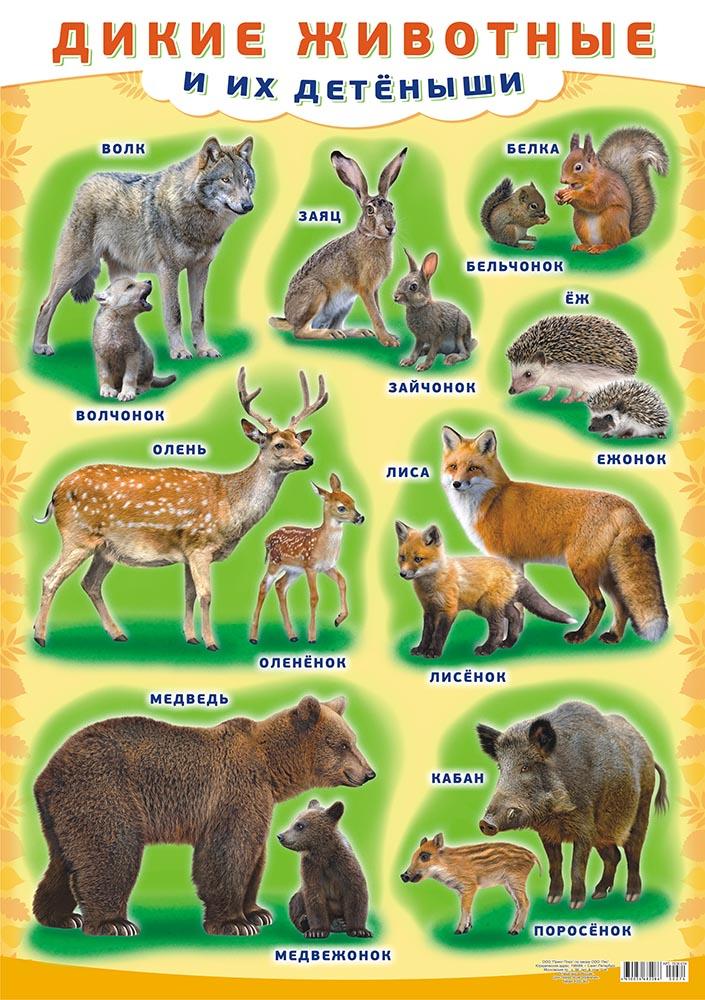"""Плакат А2 """"Дикие животные и их детеныши"""""""