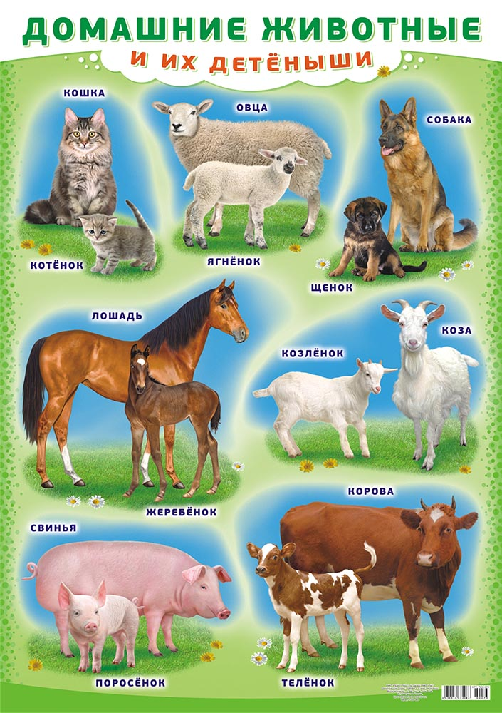 """Плакат А2 """"Домашние животные и их детеныши"""""""