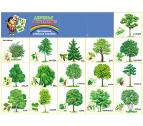 """Плакат А2  """"Деревья и кустарники"""""""