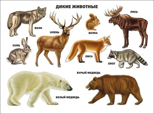 "Плакат А2 ""Дикие животные"" Проф-Пресс"